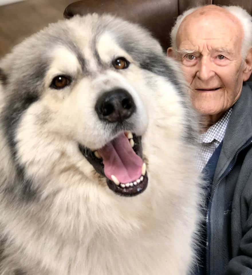 Thunder (The Therapy Huskies Project) with Mr Ashworth
